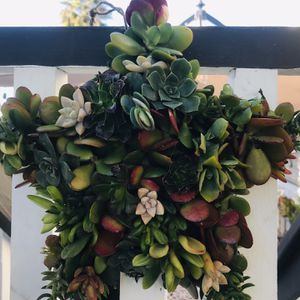 Succulent Star Wreath for Sale in Carlsbad, CA