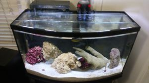 46 Gallon Bowfront Aquarium - Tank, Stand, Filters, etc for Sale in Washington, DC