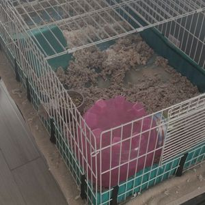 Guinea Pig Cage for Sale in Clermont, FL