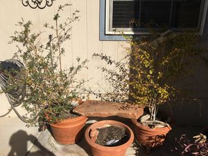 LAST CHANCE TO GET PLANTS NOT CLAY POTS!!! for Sale in Las Vegas, NV