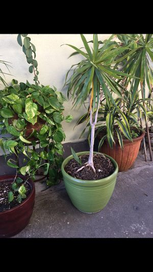 Large pot and plant for Sale in Los Angeles, CA