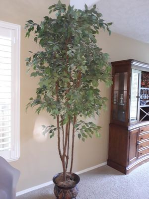 Tall silk ficus tree for Sale in Vancouver, WA
