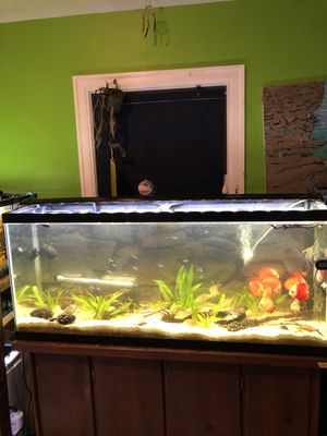 Fish tank cleaning and re-scaping (decorating) for Sale in Washington, DC