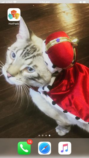 👑pet costume 👑 for Sale in Corona, CA