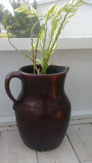 Beautiful plant with ceramic planter for Sale in Orlando, FL