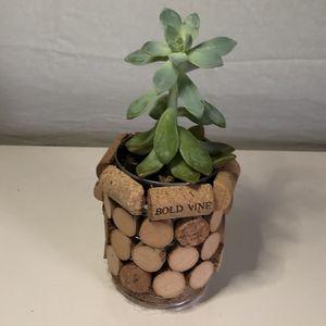 Handmade wine cork planter with succulent for Sale in Westland, MI