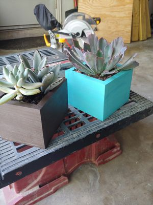 Succulent Boxes for Sale in Huffman, TX