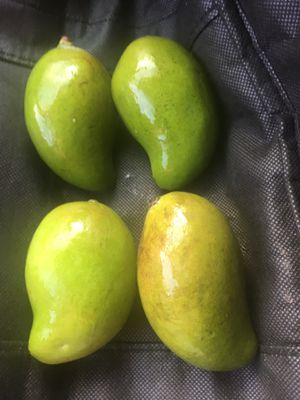 Mango fresco verde PEQUEÑO (4 mangos) for Sale in Houston, TX