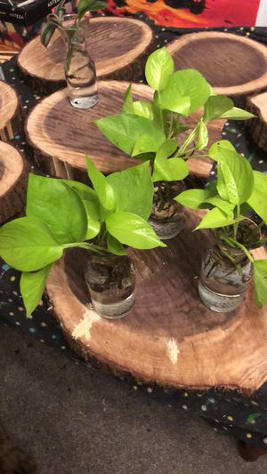 Rooted Neon Pathos for Sale in Elk Grove Village, IL