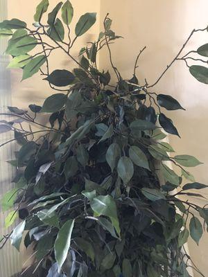 Fake Plant for Sale in Philadelphia, PA
