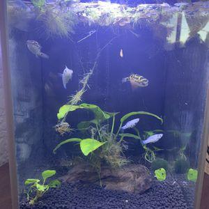 2.6 Gallon Aquarium for Sale in East Los Angeles, CA