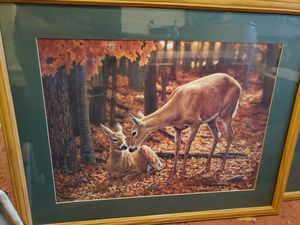 Deer photos with frames for Sale in Lyman, SC
