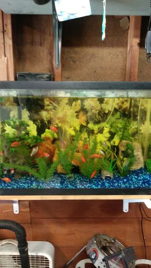 Fish tank including fish and everything with it. for Sale in Dearborn, MI