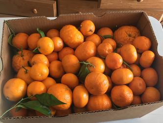Mandarins Mandarinas for Sale in Delano,  CA