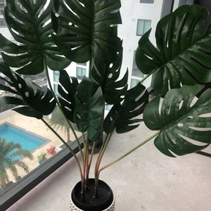 Palm Plant for Sale in Miami, FL