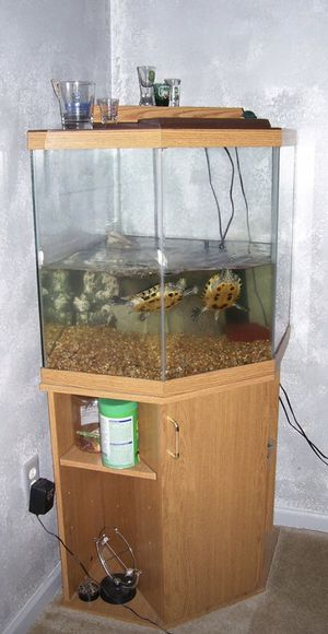 Aquarium and stand for Sale in Greenville, SC