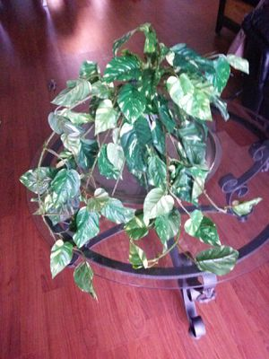 3 beautiful plastic plants gorgeous artificial plants no vase included with these fake plant for Sale in Kissimmee, FL