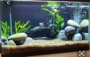 10 gallon fish tank for Sale in Woodbridge, VA
