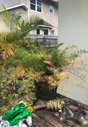 Plant and pot Lots for Sale for Sale in New Port Richey, FL