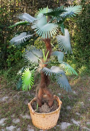 FLORIDA PALM TREE (FAKE PLANT) (MAKE OFFER) OBO for Sale in Kissimmee, FL