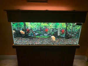 75 gallons / stand /fish for Sale in Hialeah, FL