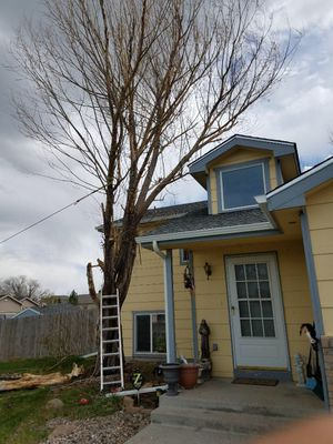 Tree Falling/Trimming for Sale in Warren Air Force Base, WY