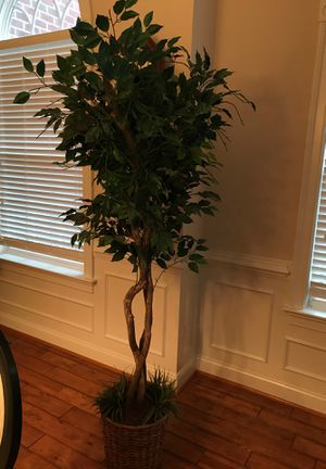 Artificial plant for Sale in Chantilly, VA
