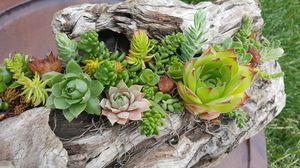 Living Succulent/Sedum Art for Sale in Hillsboro, OR
