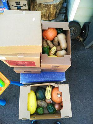 Free vegies for Sale in Seattle, WA