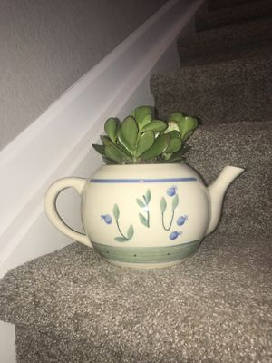 Spring natural succulent plant in a beautiful pot for Sale in Lochbuie, CO