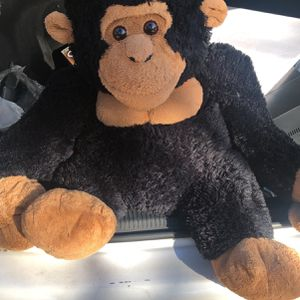 Monkey for Sale in Albany, GA