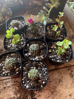 Succulent plants and cactus for Sale in Riverside, CA