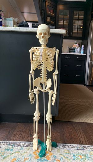 Study Skeleton for Sale in Newtown, CT