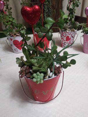 Succulents en cubetitas for Sale in Bell, CA