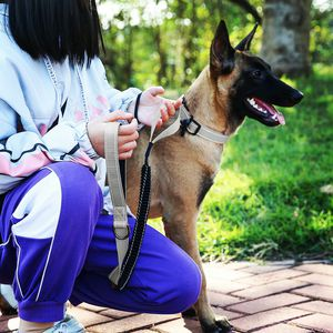 NEW!! Dog Grey Bungee Leash and Collar Set for Sale in Norwalk, CA