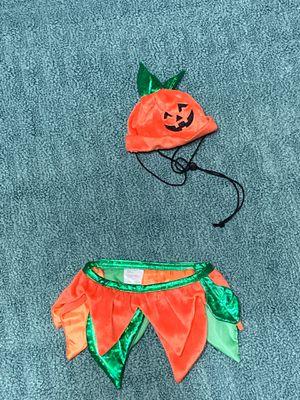 Pumpkin Pet costume for Sale in Dallas, TX