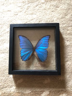 Butterfly wall and home or office decor art for Sale in Imperial, MO