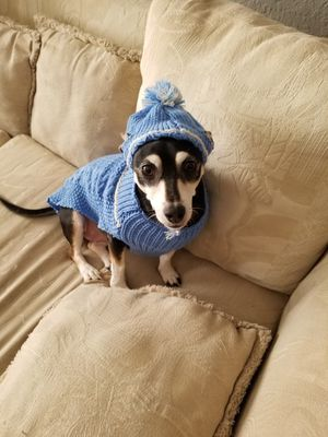 Small Dog Clothes for Sale in Orlando, FL