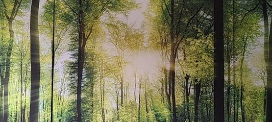 Forest Canvas Wall Art Decor - 3 Panel for Sale in Redmond,  WA