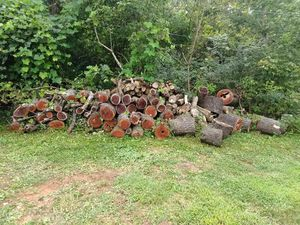 Fire wood for Sale in Hollins, VA