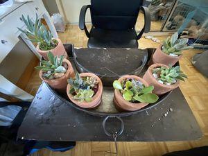 Succulent Plant Arrangements for Sale in Fairfax, VA