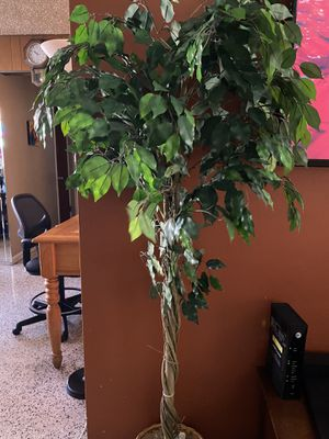 Fake plant for Sale in Hialeah, FL