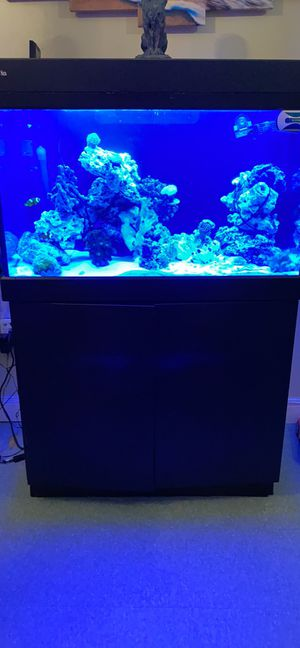 Red sea max 250 for Sale in Lynn, MA