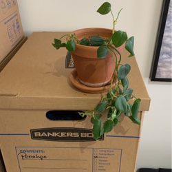 Planter And Plant for Sale in Washington,  DC