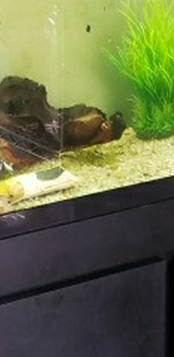 Large Aquarium for Sale in Buckley,  WA