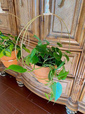Single Macrame Plant Hanger | Boho Home Decor **ONE RING** for Sale in Chula Vista, CA