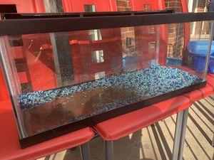 20 Gallon fish tank + accessories for Sale in Cincinnati, OH