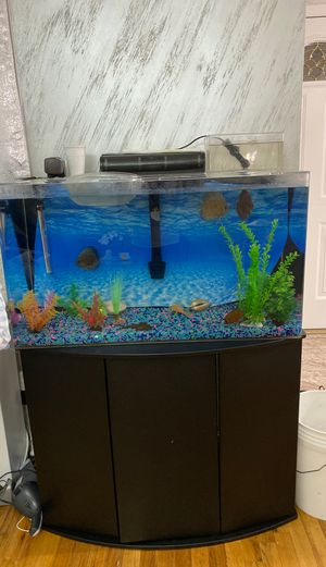 Discus Fish Tank for Sale in Brooklyn, NY