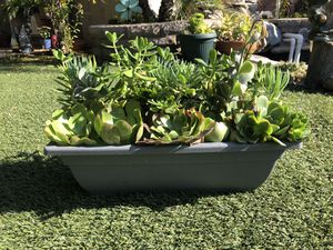 Nicely arranged mix of beautiful succulent plants in rectangle pot for Sale in Los Angeles, CA