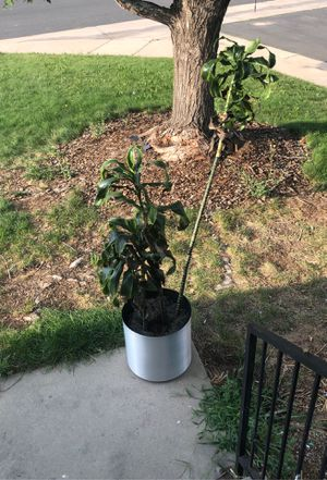 Free plant. for Sale in Denver, CO